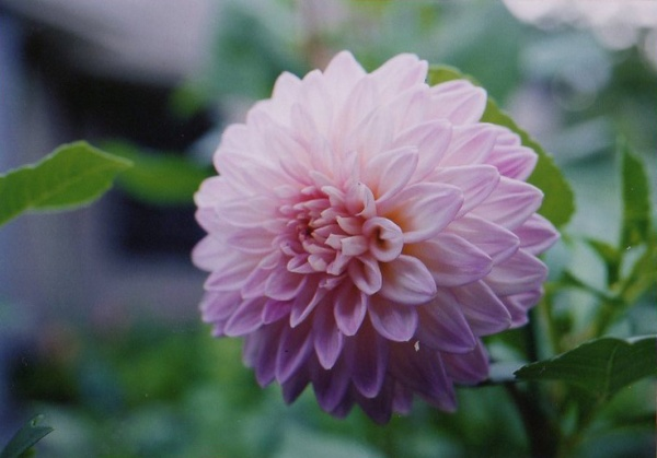 gardening-20